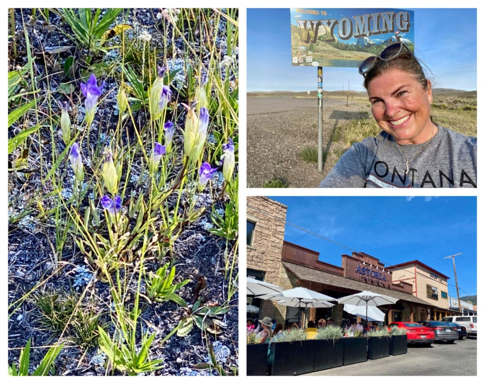 jackson-hole-flowers-and-downtown