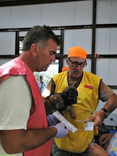 volunteers at spay and neuter clinic