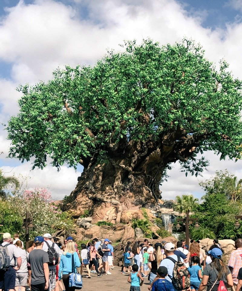 Here is your ultimate guide to Disney's Animal Kingdom.