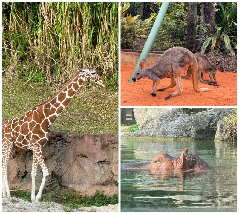 animals at Busch Gardens Tampa