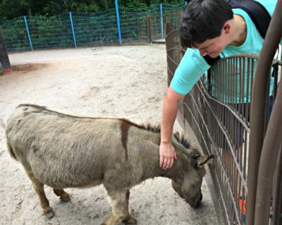 Visiting Animal Kingdom's Affection Station is just one of the many things to do at Walt Disney World.