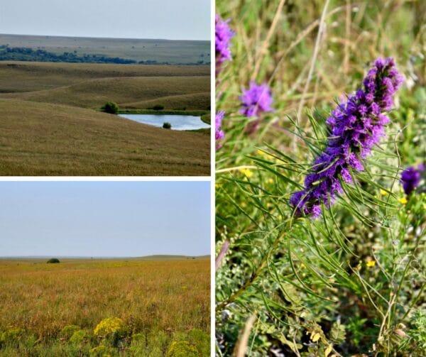 tallgrass-prairie-flint-hills-kansas