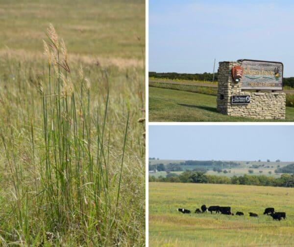 tallgrass-prairie-grasses-flint-hills-kansas