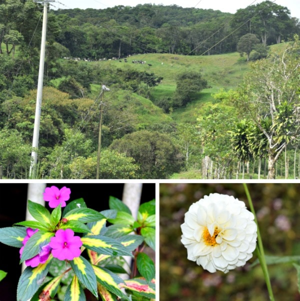 flowers and landscape in volcan