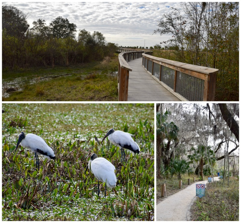 Our itinerary for Gainesville, Florida includes hiking through Paynes Prairie.