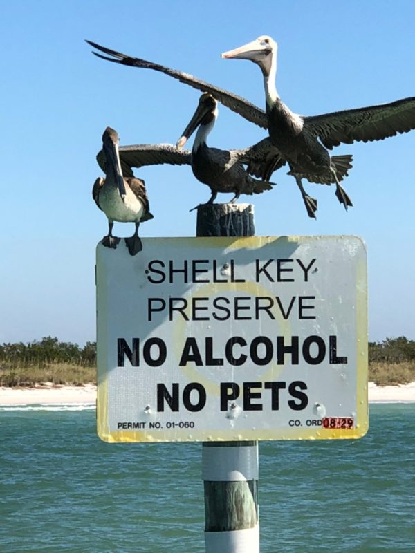 shell-island-signs-st-pete