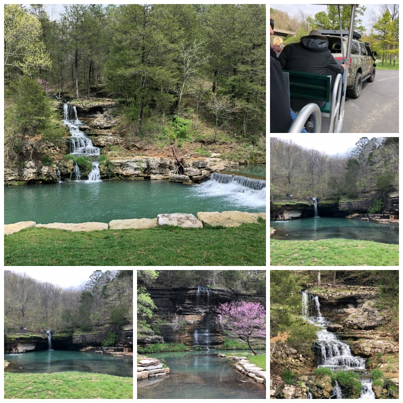 Amazing natural setting filled with flowers, trees, and waterfalls at Dogwood Canyon.