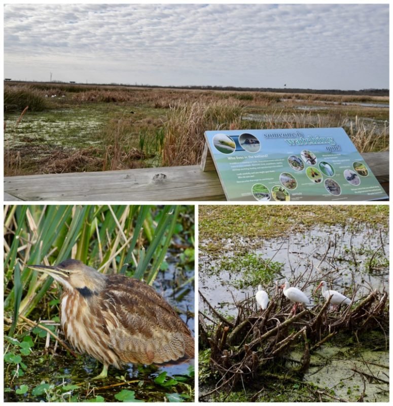 Our itinerary for Gainesville, Florida includes a walk through the Paynes Prairie.