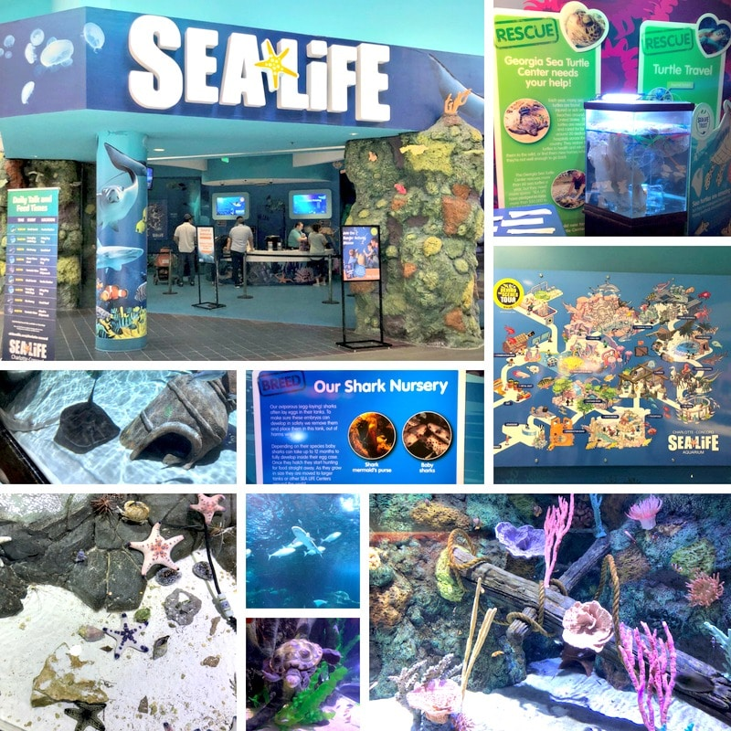 sea life aquarium concord