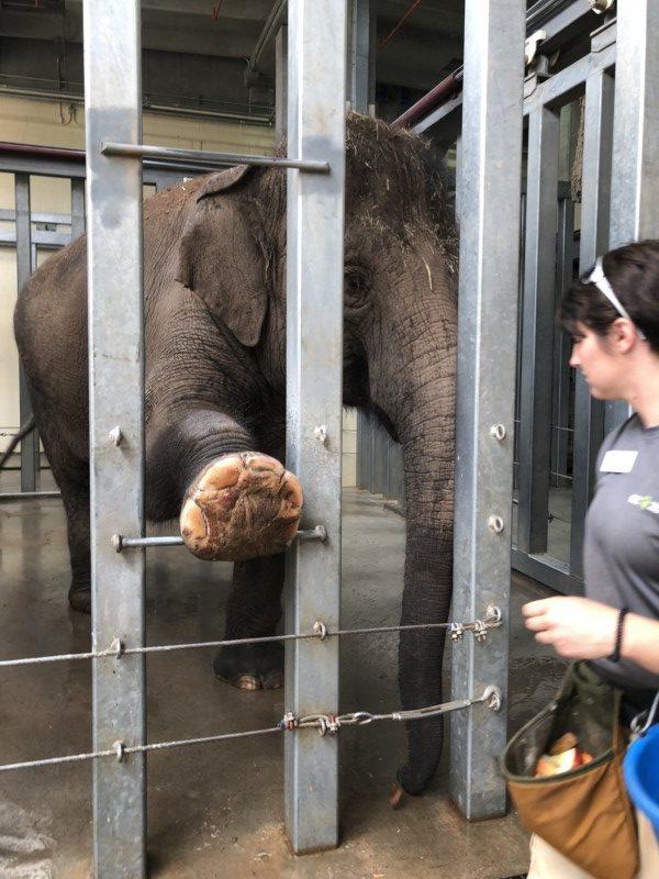 Any itinerary to Oklahoma City should include a visit to the Oklahoma City Zoo.