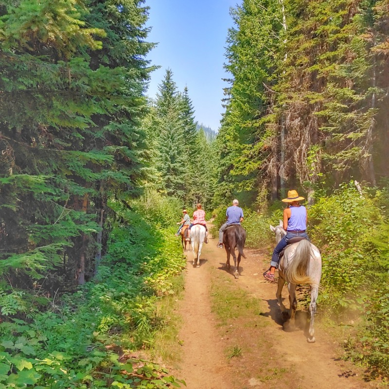 If you love horses, be sure to take time to go riding on Schweitzer Mountain during your North Idaho road trip.