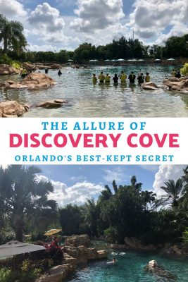 Discovery Cove is obviously Orlandp's best-kept secret with a tropical oasis in the heart of the city.