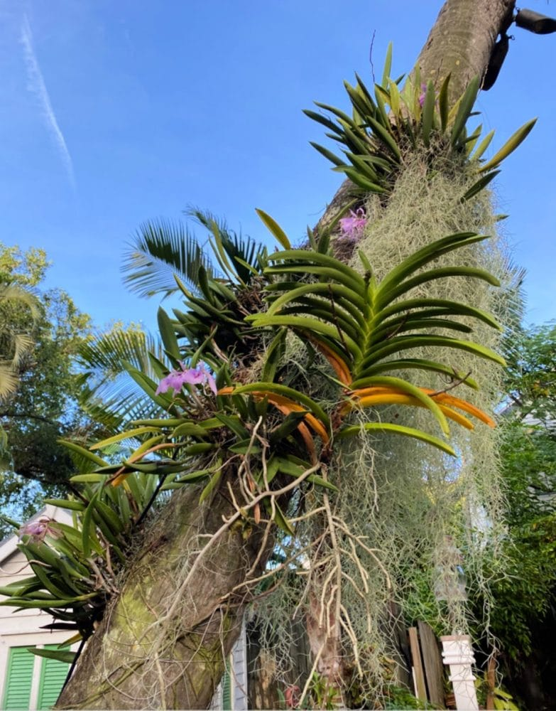 Audubon-House-and-tropical-gardens-exotic-palms