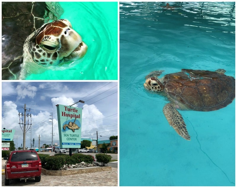 No visit to the Upper or Middle Keys is complete without a visit to the Turtle Hospital in Marathon.