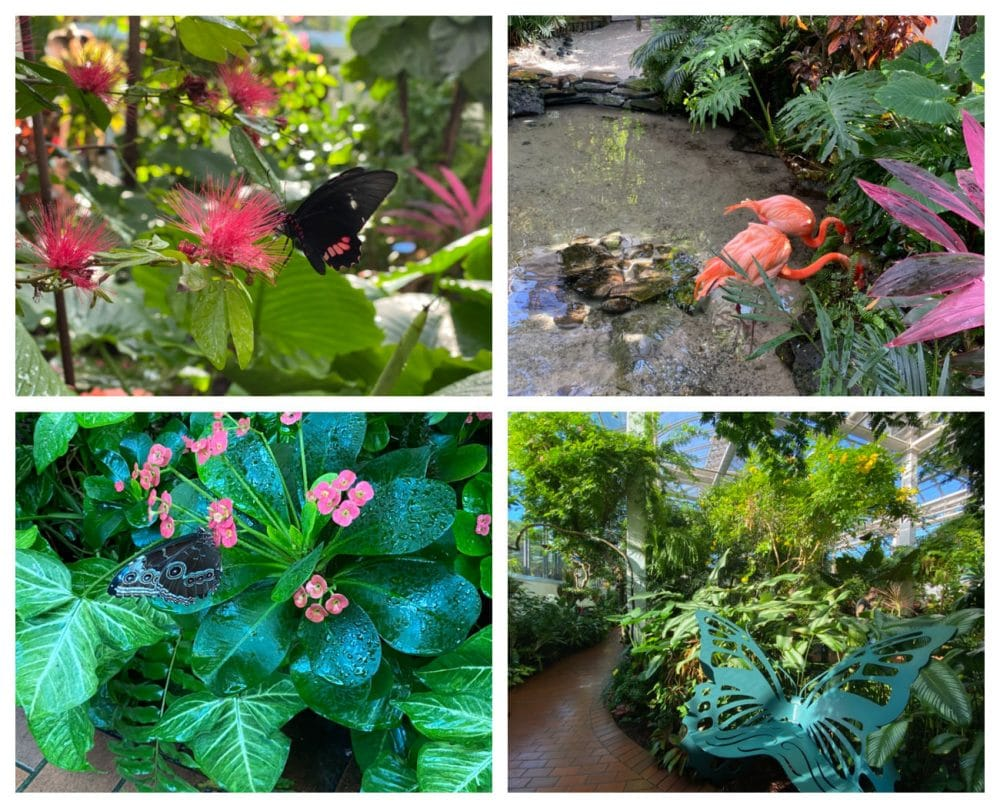 key-west-butterfly-museum-and-flamingos