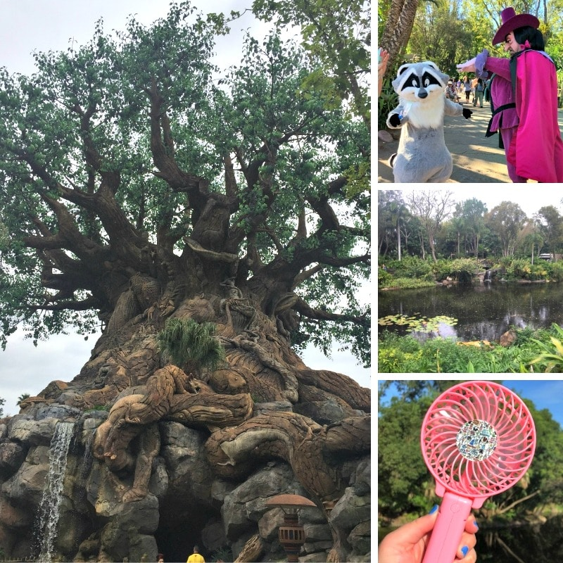 Here are a few tips for visiting Disney's Animal Kingdom.