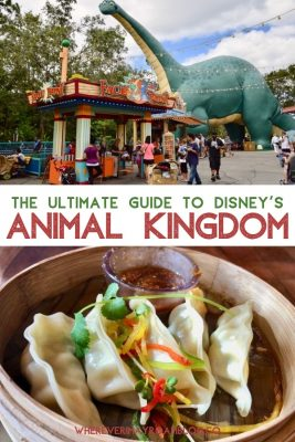 guide-animal-kingdom-disney-world-pin