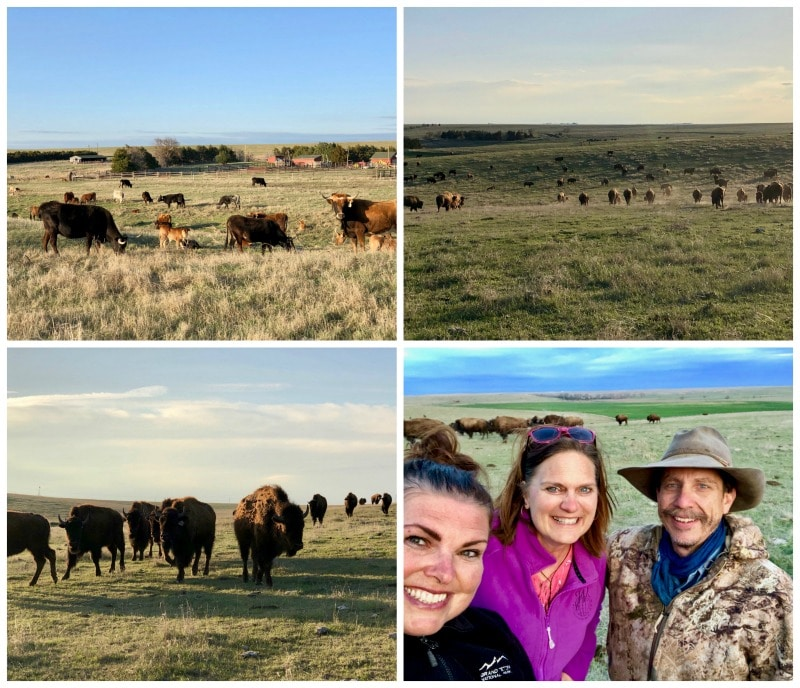 Our tour of the cow and buffalo fields with Ken Klemm of The Buffalo Guys was my favorite part of the Big Kansas Road Trip.