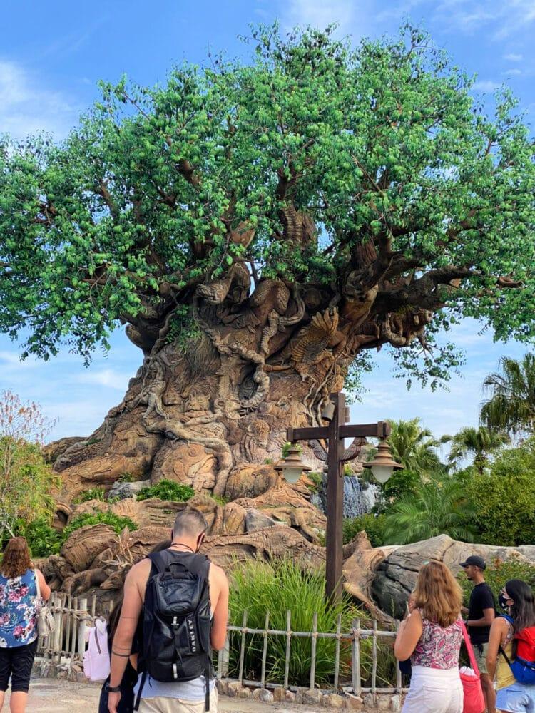 tree-of-life-disney