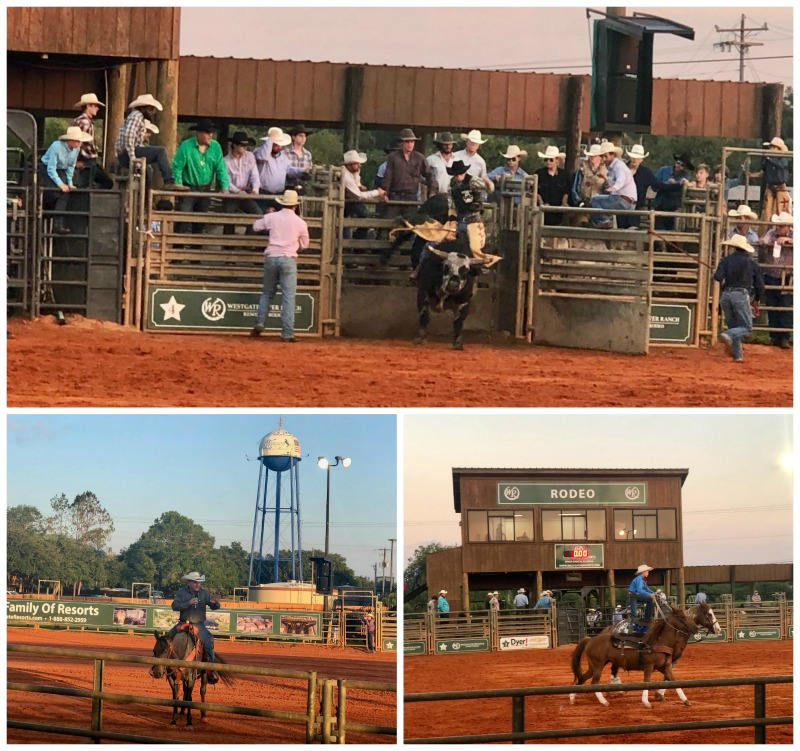 rodeo bull riding westgate