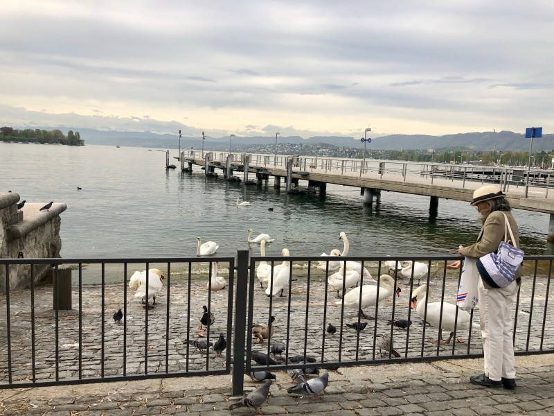 feeding ducks at Lake Zurich