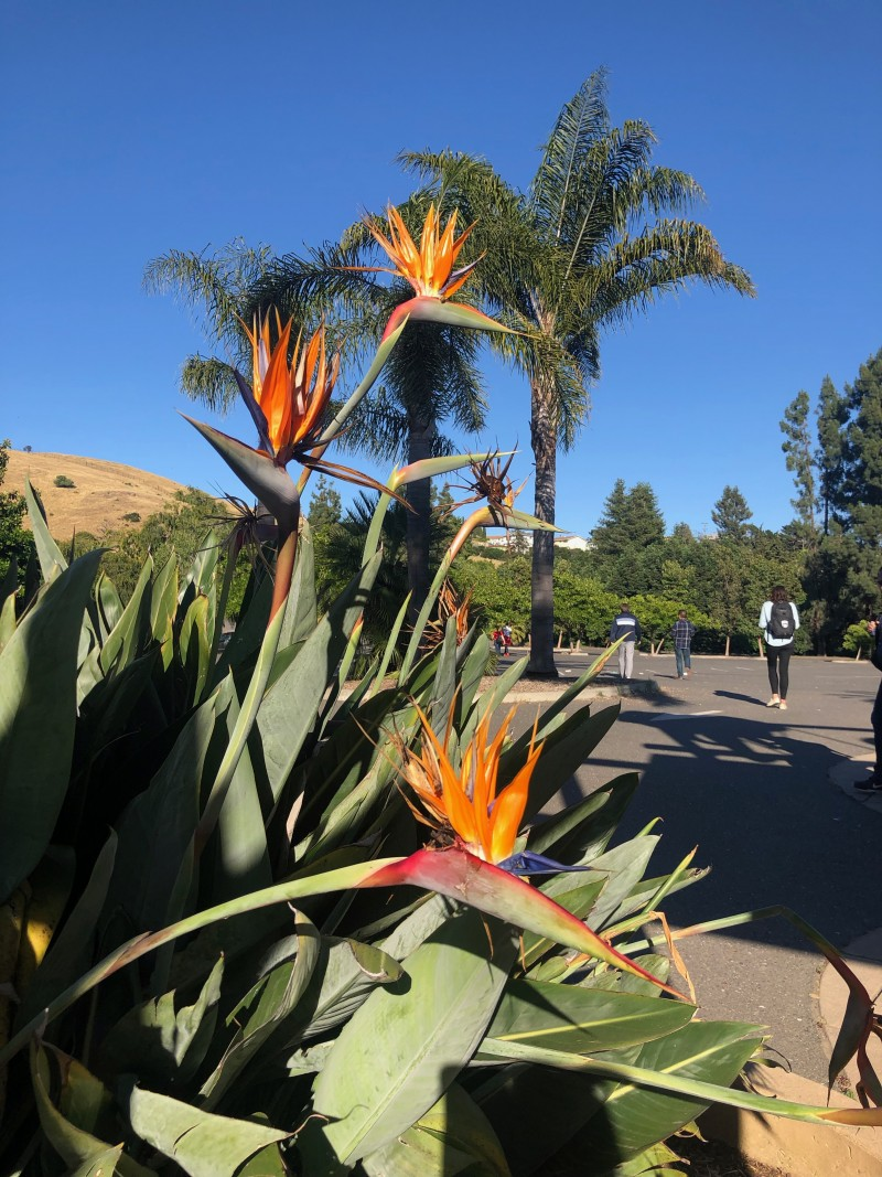 things to do in oakland california beautiful flowers