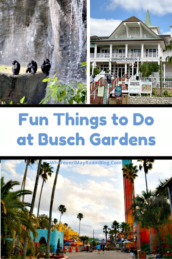 Busch Gardens_ Things to see and do