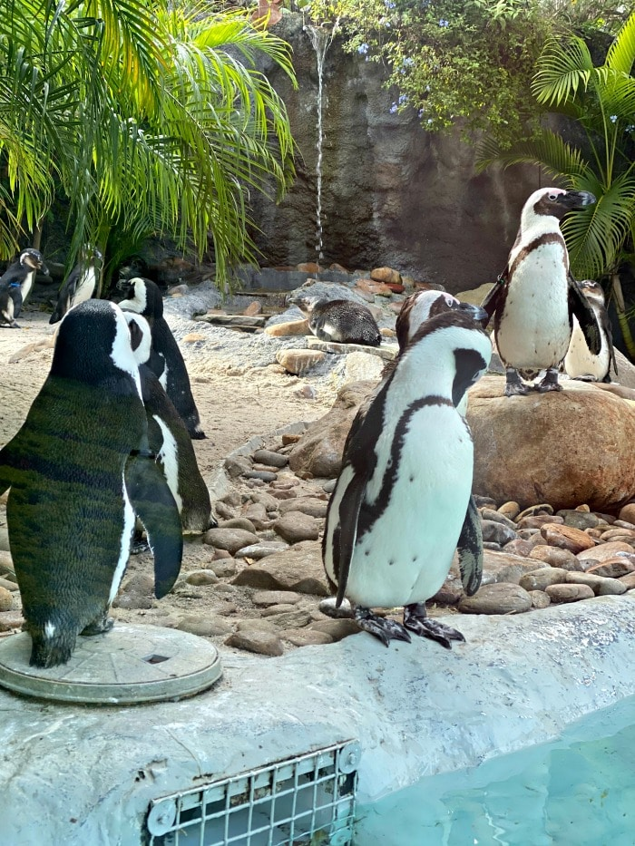 penguin exhibit