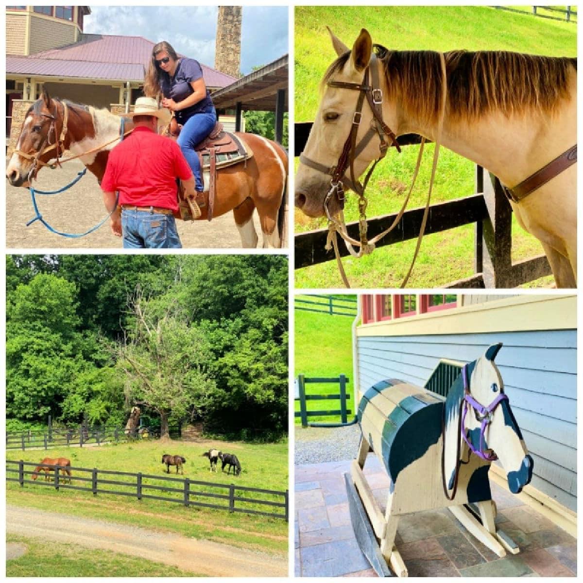 Brasstown stables horses