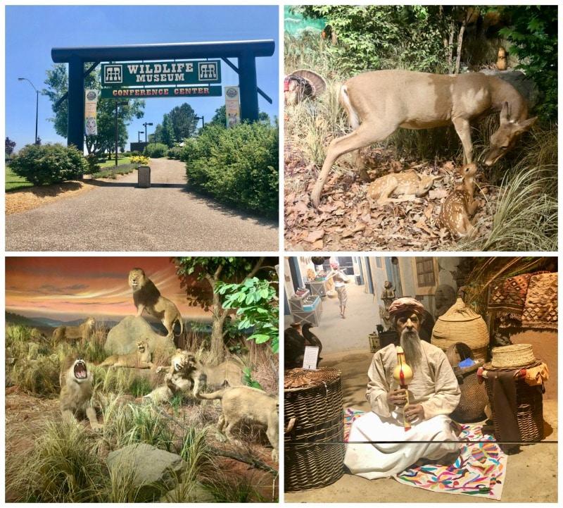 wildlife museum Salina Zoo