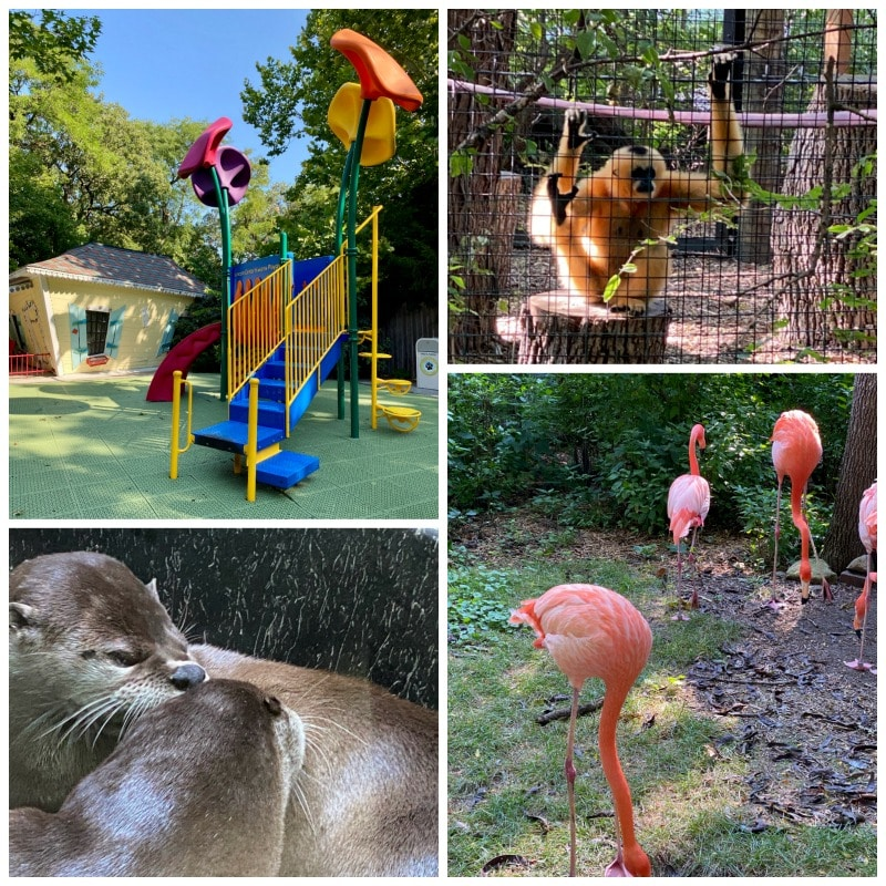 animal exhibits and playground lincoln children's zoo