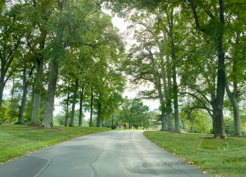 long tree trimmed drive way at graylyn estate