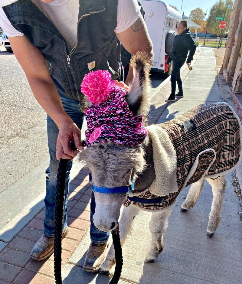 dressed-up-donkey-on-the-street-in-winslow