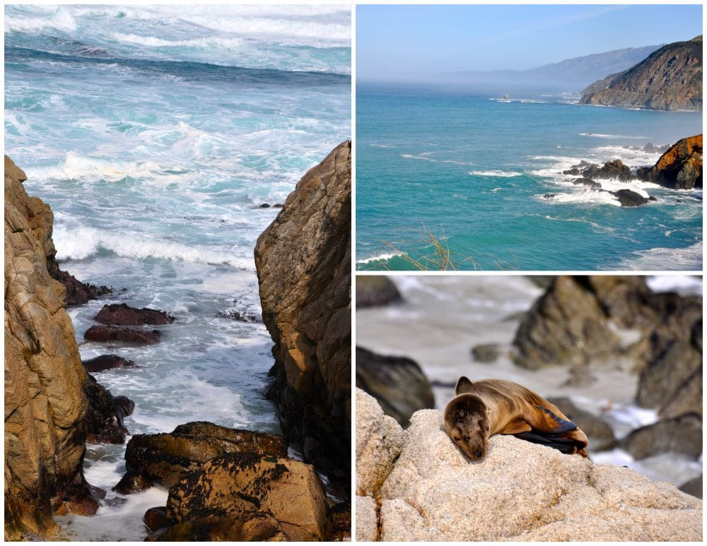 driving pch scenery and sea lions