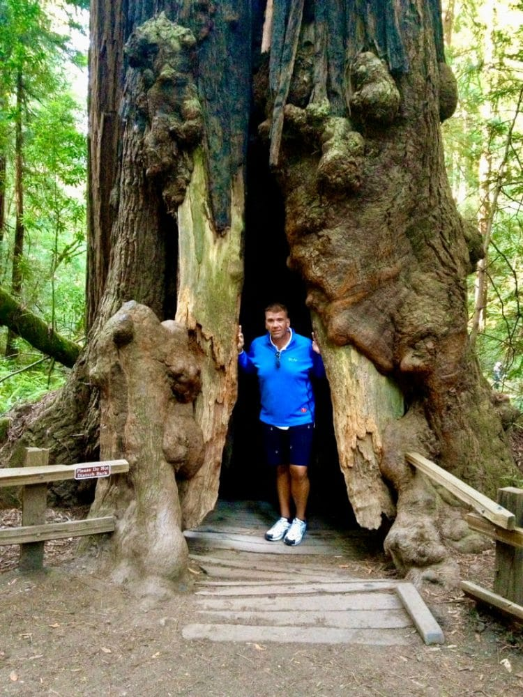 muir woods man inside tree