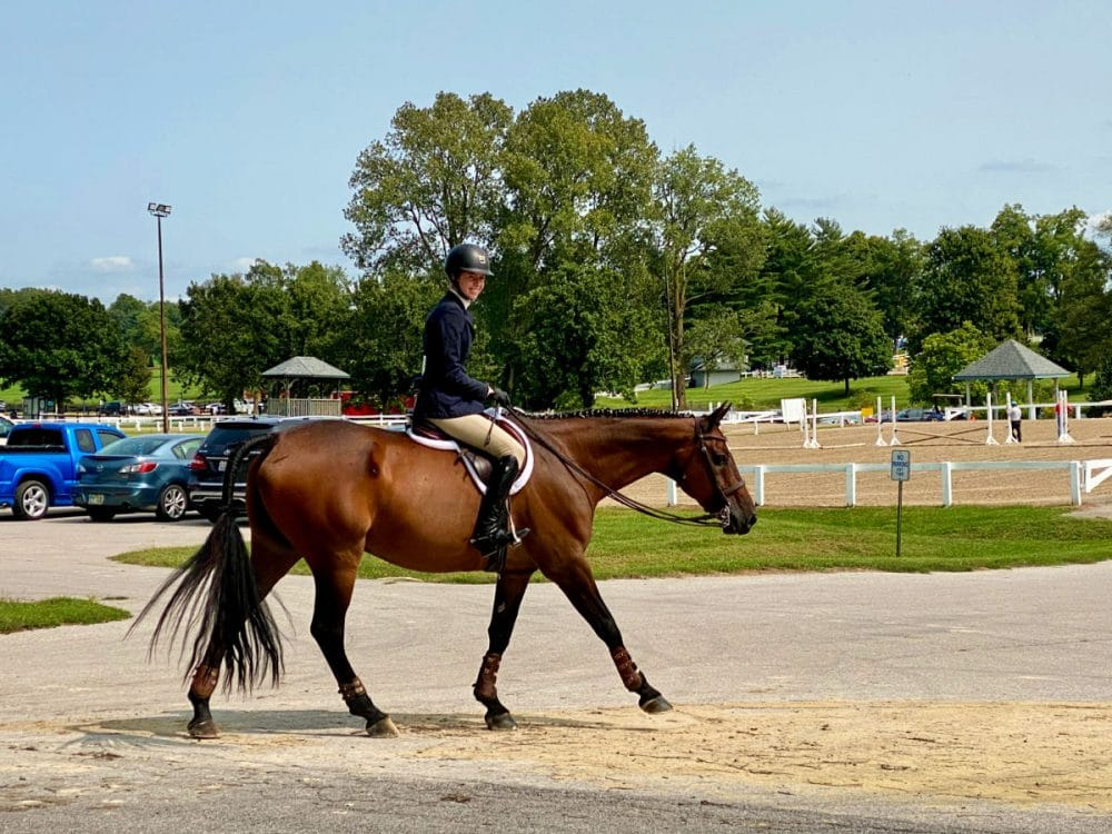 thoroughbred-horse-at-show