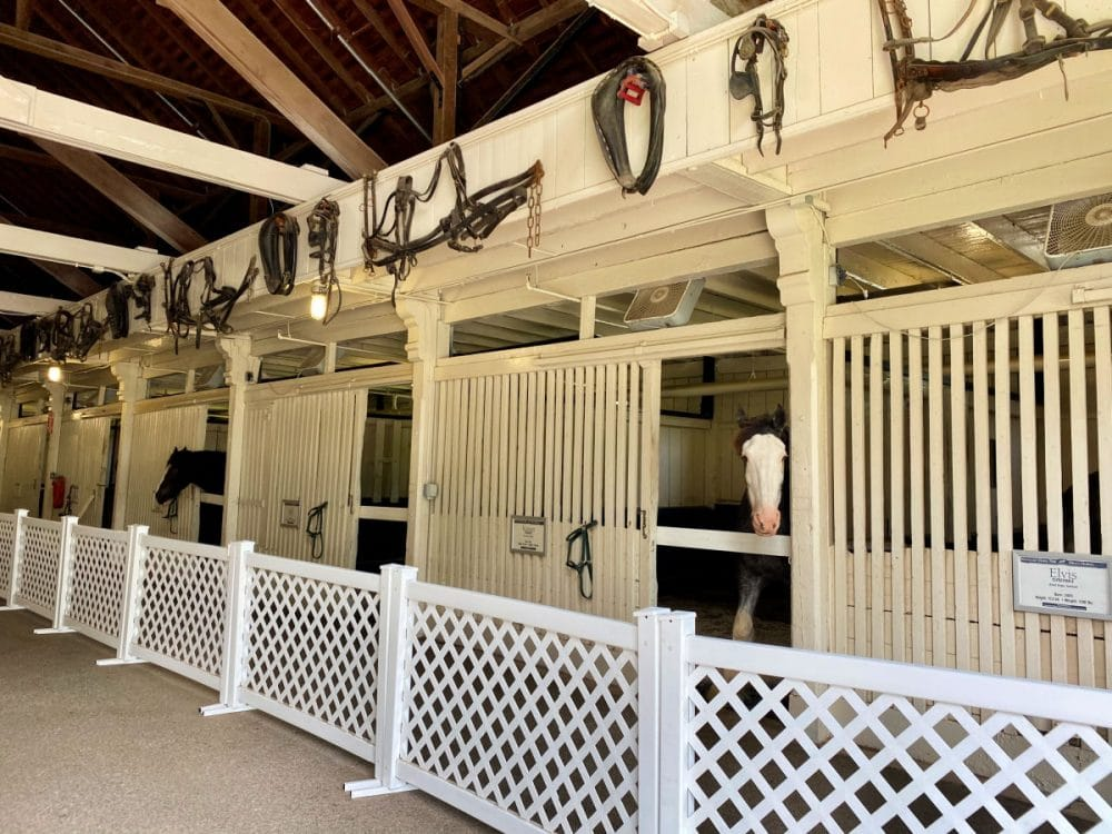 horse-stables-with-clydesdales