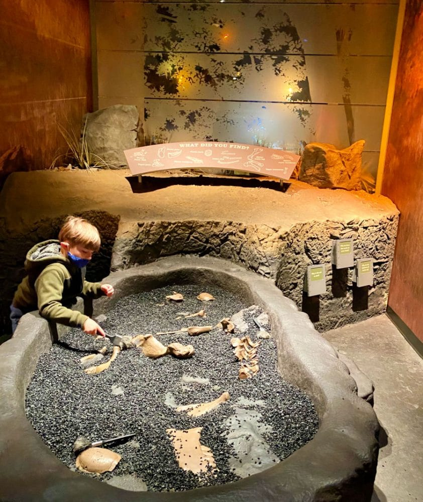 kid playing at gray fossil site