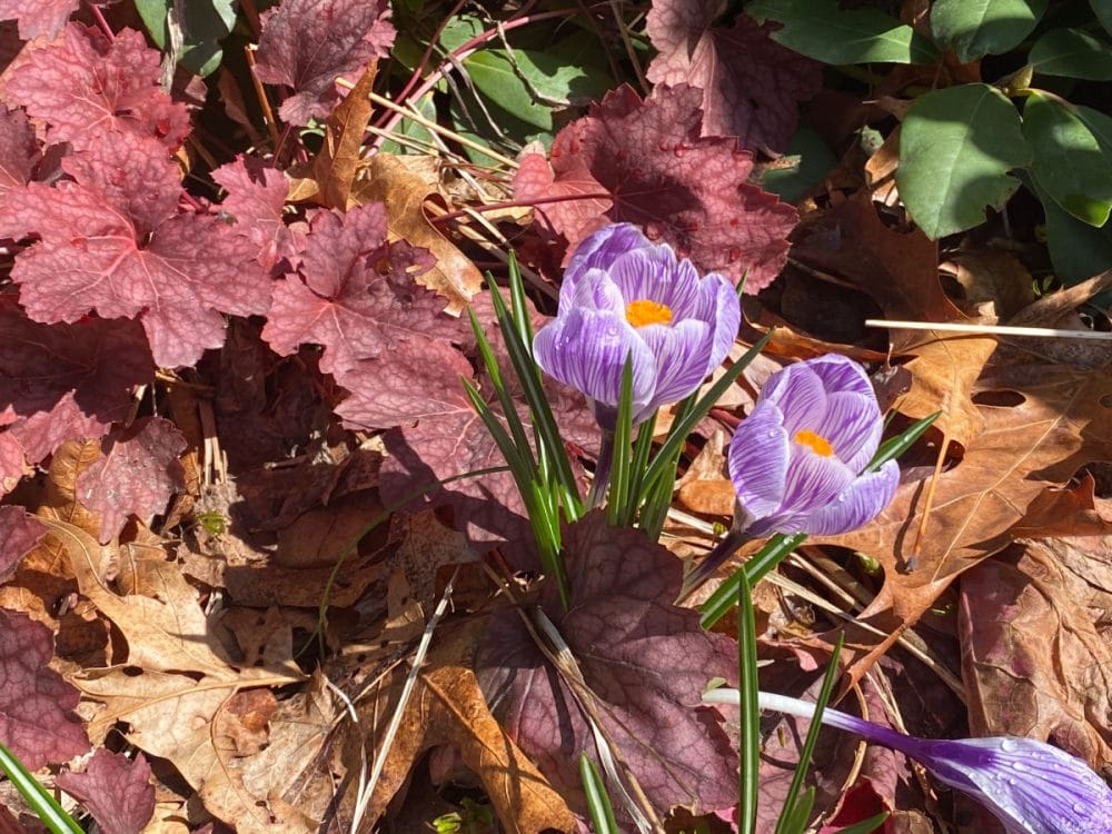 purple flower amidst fall leaves