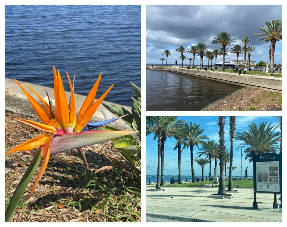 sanford-waterfront-park-and-palm-trees