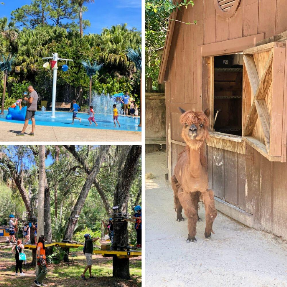 sanford-zoo-animals-and-splash-pad