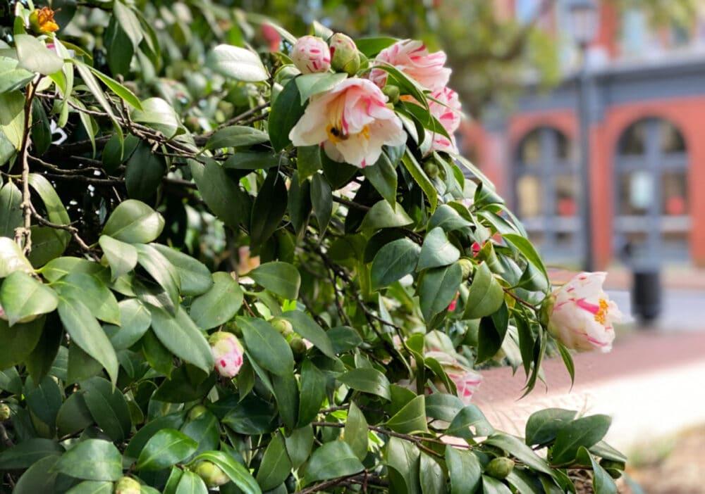 spring-flowers-in-savannah-georgia