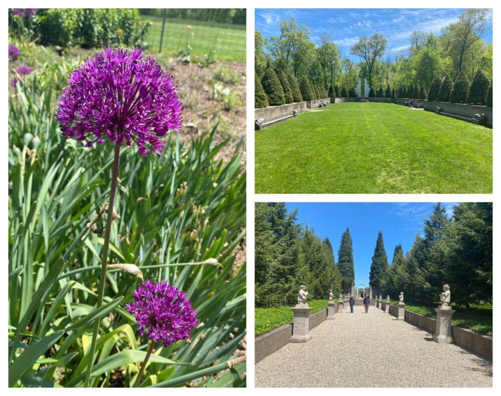 allerton-park-flowers-and-gardens