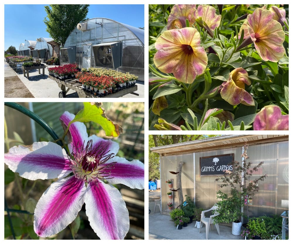 Grimms-gardens-kansas-beautiful-flowers