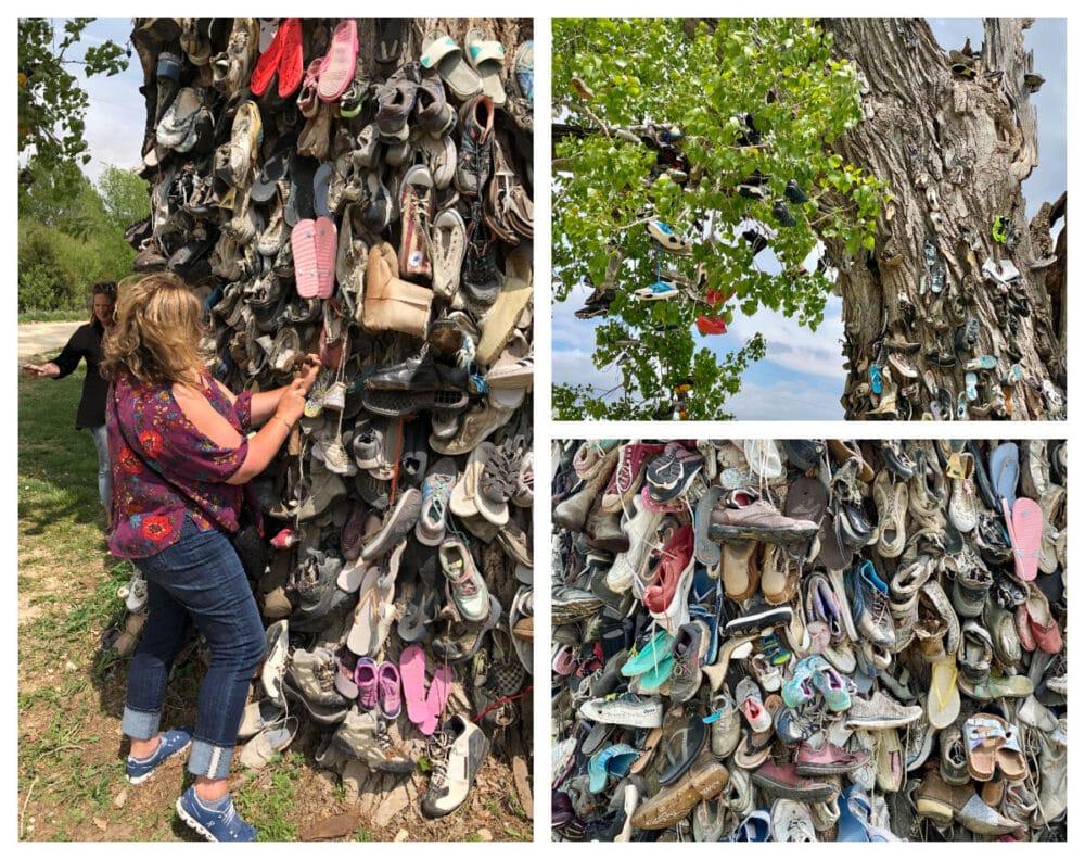 shoe-tree-nehama-county